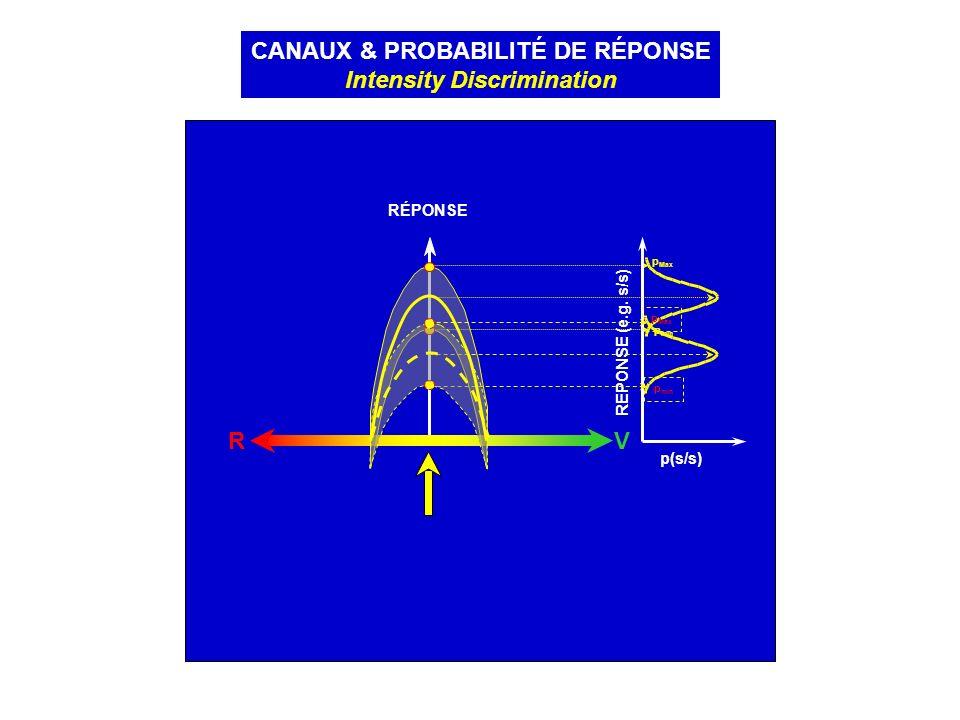 RV RÉPONSE CANAUX & PROBABILITÉ DE RÉPONSE Intensity Discrimination p(s/s) REPONSE (e.g. s/s) p min p Max p min p Max p(s/s)