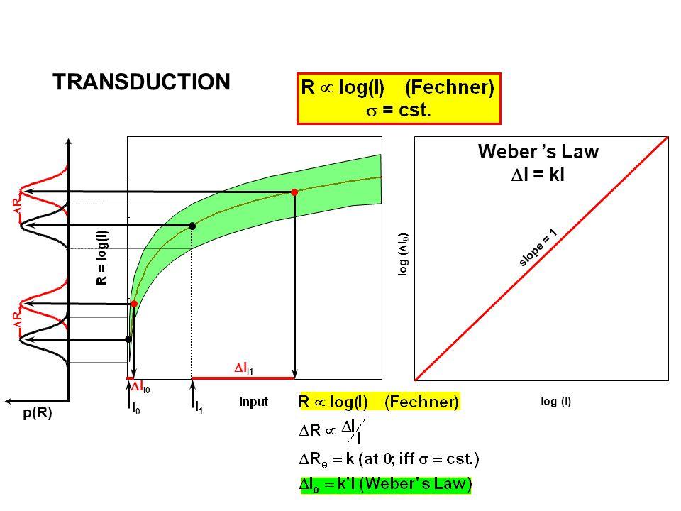 I0I0 I1I1 I I1 R I I0 R = cst. p(R) log (I) slope = 1 Weber s Law I = kI TRANSDUCTION