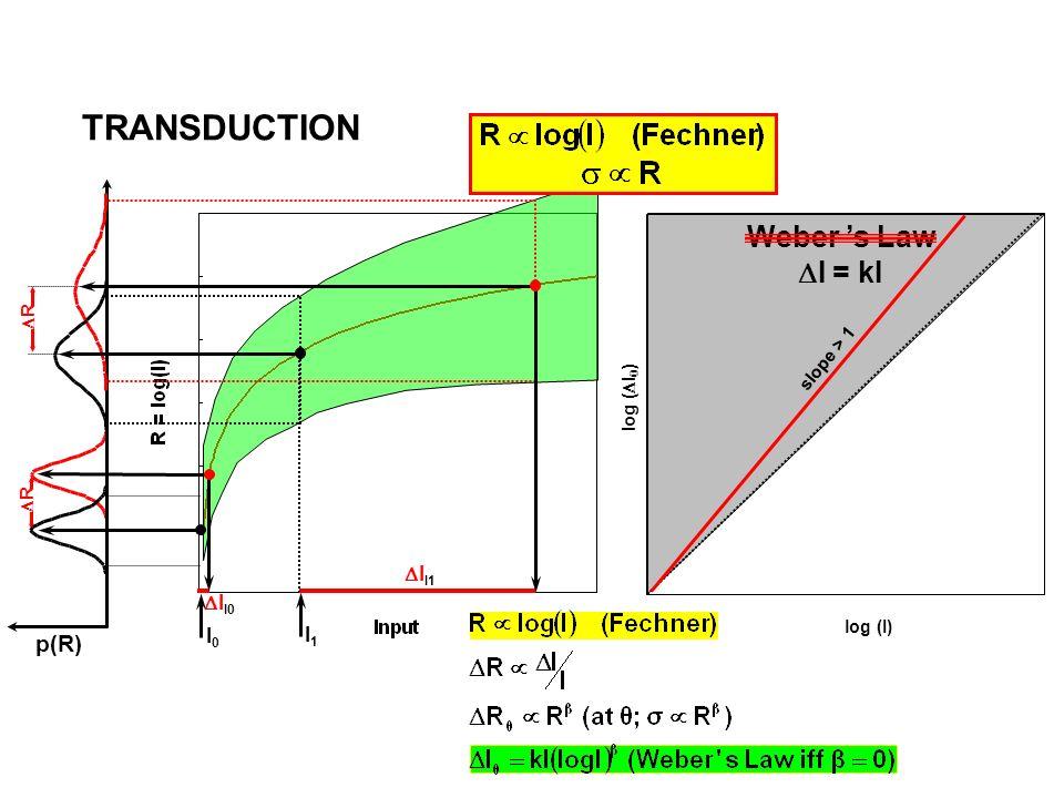 I0I0 I1I1 I I0 R p(R) R I I1 log (I) slope > 1 Weber s Law I = kI TRANSDUCTION