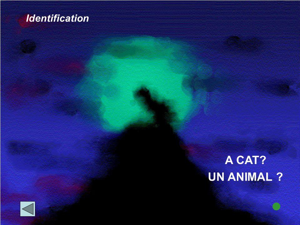 A CAT? Identification UN ANIMAL ?