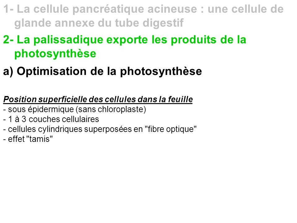 a) Optimisation de la photosynthèse b) Optimisation de l export des photosynthétats Proximité parenchyme palissadique/vaisseaux conducteurs de sève élaborée - continuité cytoplasmique du parenchyme palissadique (plasmodesmes) - charge du phloeme - abondance des nervures secondaires