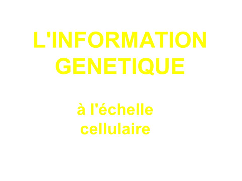 L INFORMATION GENETIQUE à l échelle cellulaire