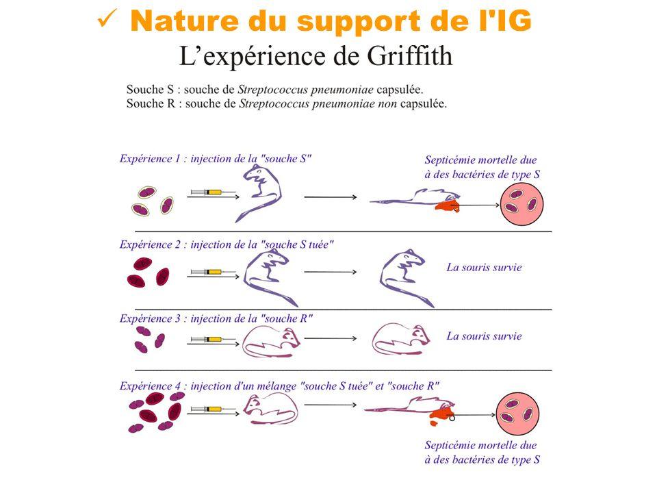 Nature de l IG