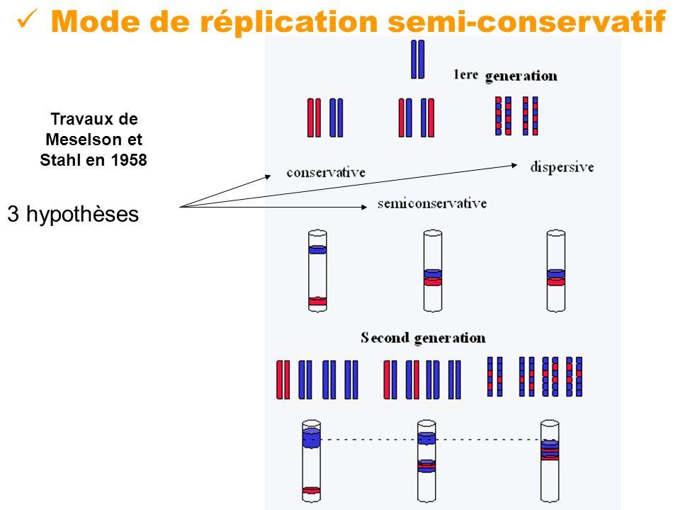 Mode de réplication semi-conservatif Travaux de Meselson et Stahl en 1958 3 hypothèses
