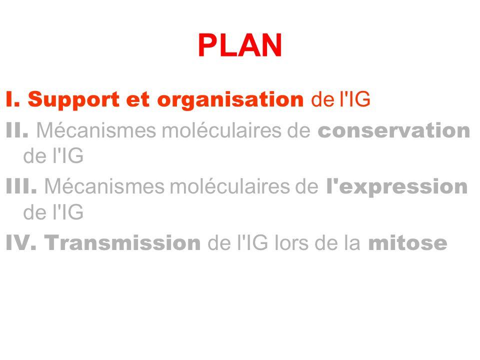 PLAN I. Support et organisation de l'IG II. Mécanismes moléculaires de conservation de l'IG III. Mécanismes moléculaires de l'expression de l'IG IV. T