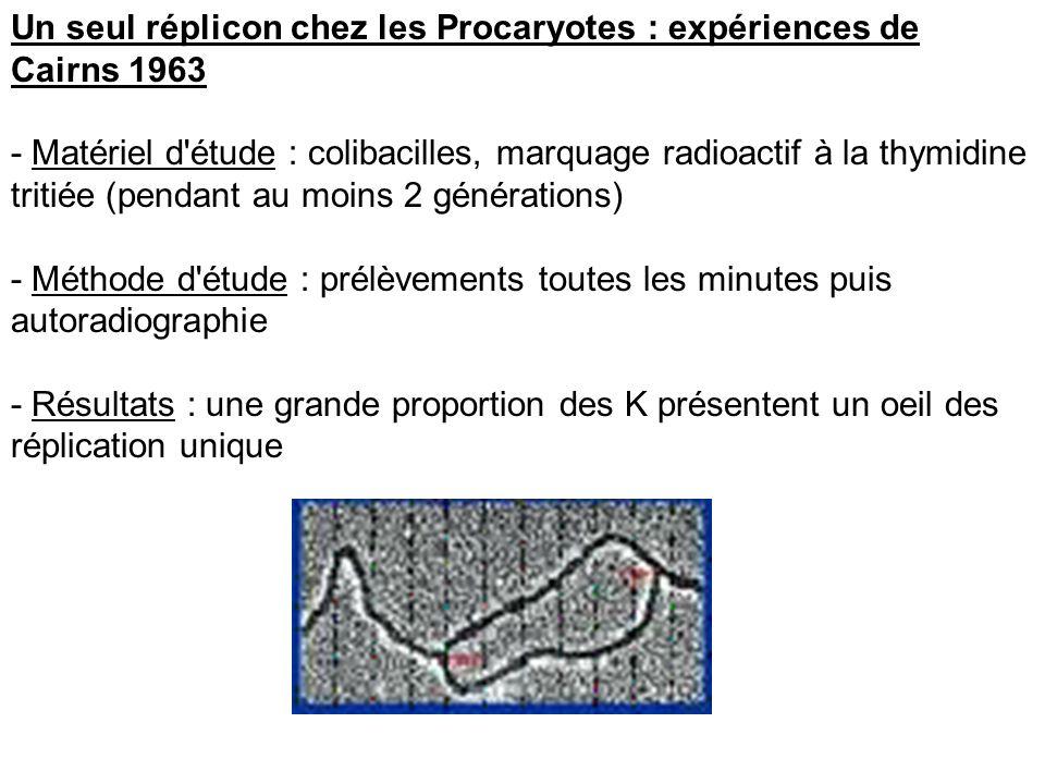 Un seul réplicon chez les Procaryotes : expériences de Cairns 1963 - Matériel d'étude : colibacilles, marquage radioactif à la thymidine tritiée (pend