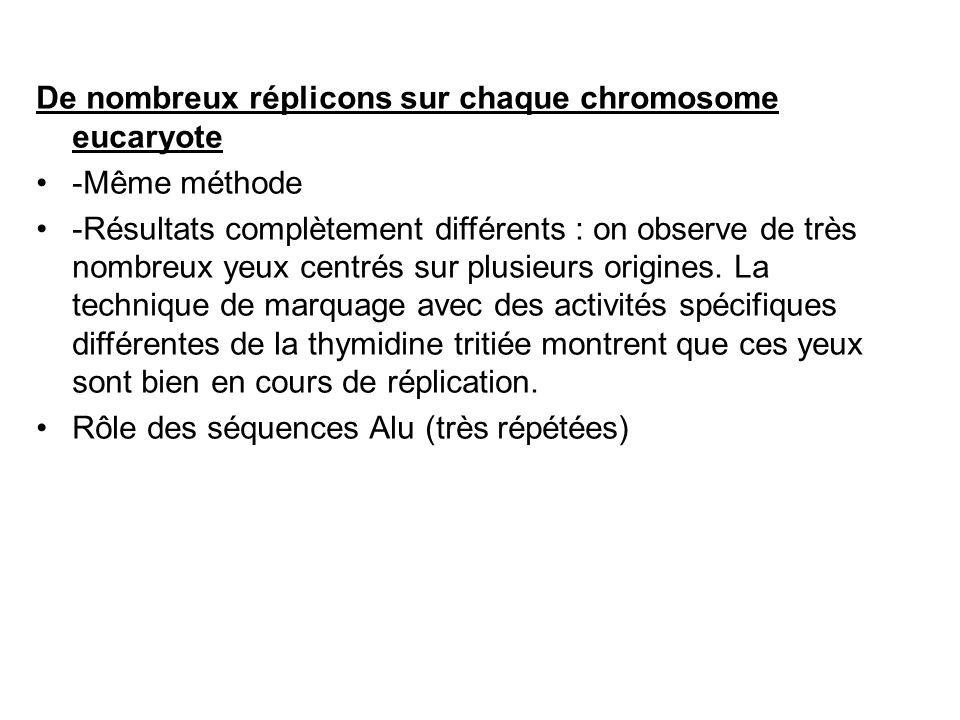 De nombreux réplicons sur chaque chromosome eucaryote -Même méthode -Résultats complètement différents : on observe de très nombreux yeux centrés sur