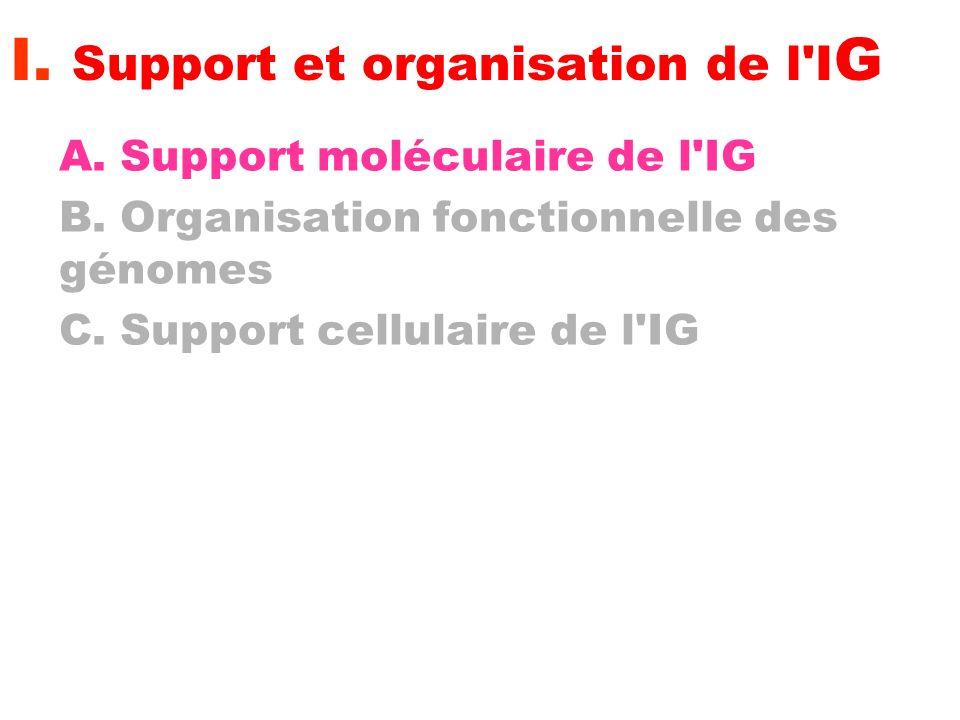 I. Support et organisation de l'I G A. Support moléculaire de l'IG B. Organisation fonctionnelle des génomes C. Support cellulaire de l'IG