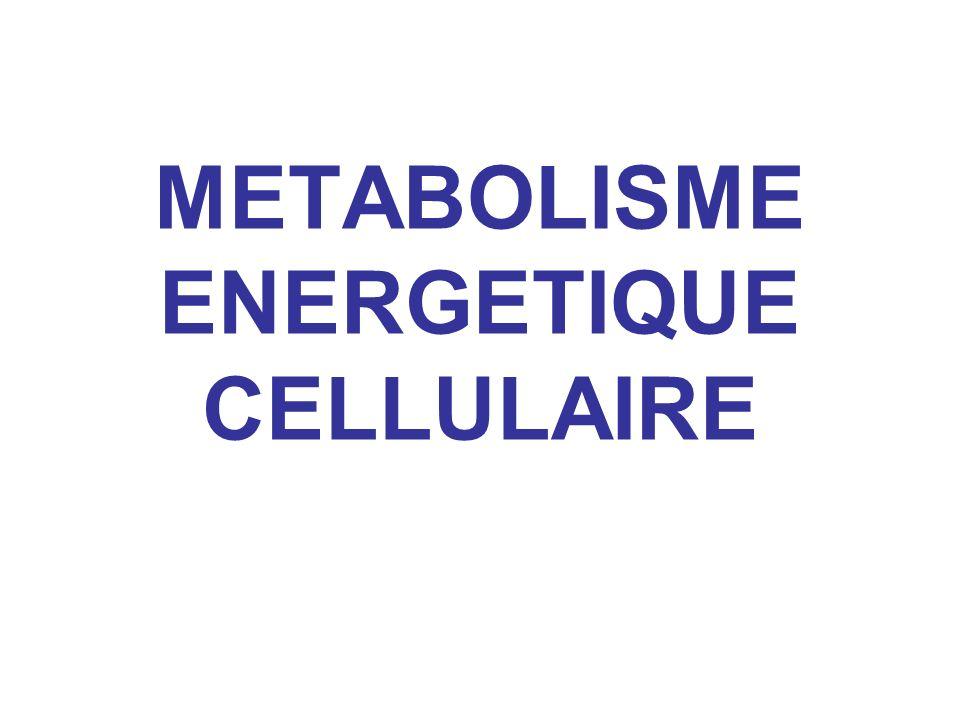 Variation d énergie libre de Gibbs (ou enthalpie libre) (notée G ) : mesure la quantité d énergie max.