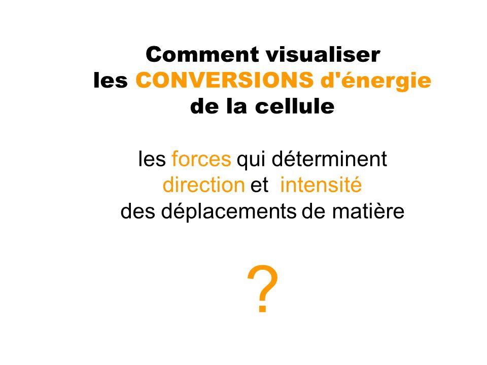 Comment visualiser les CONVERSIONS d'énergie de la cellule les forces qui déterminent direction et intensité des déplacements de matière ?