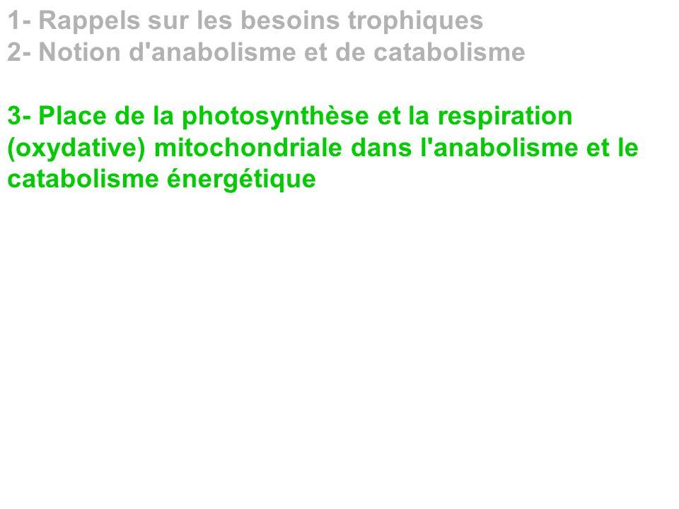 1- Rappels sur les besoins trophiques 2- Notion d'anabolisme et de catabolisme 3- Place de la photosynthèse et la respiration (oxydative) mitochondria