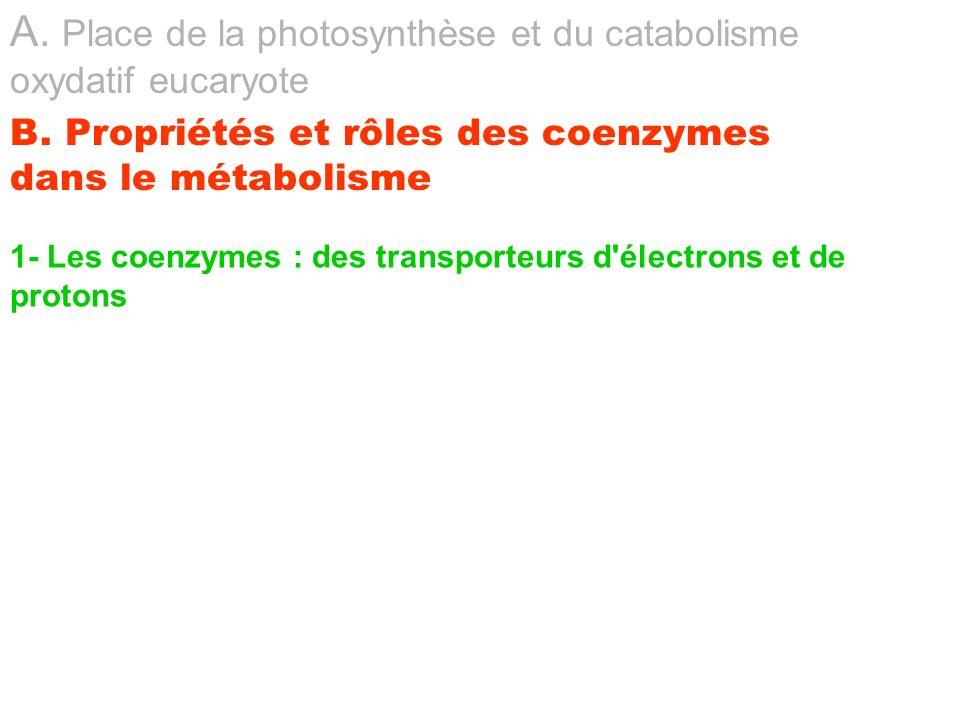 1- Les coenzymes : des transporteurs d'électrons et de protons A. Place de la photosynthèse et du catabolisme oxydatif eucaryote B. Propriétés et rôle