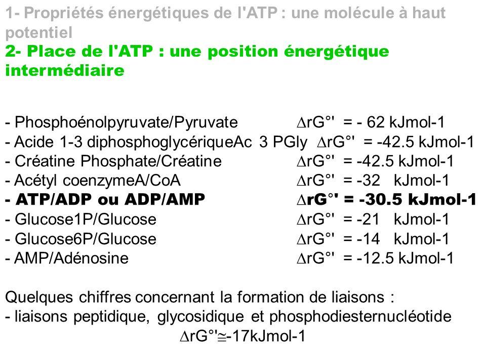 1- Propriétés énergétiques de l'ATP : une molécule à haut potentiel 2- Place de l'ATP : une position énergétique intermédiaire - Phosphoénolpyruvate/P