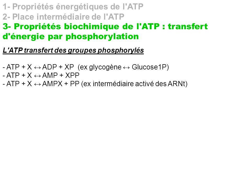 1- Propriétés énergétiques de l'ATP 2- Place intermédiaire de l'ATP 3- Propriétés biochimique de l'ATP : transfert d'énergie par phosphorylation L'ATP