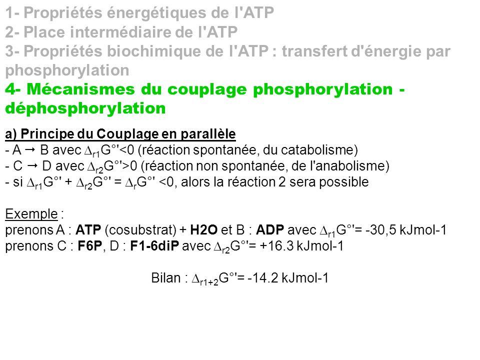 1- Propriétés énergétiques de l'ATP 2- Place intermédiaire de l'ATP 3- Propriétés biochimique de l'ATP : transfert d'énergie par phosphorylation 4- Mé