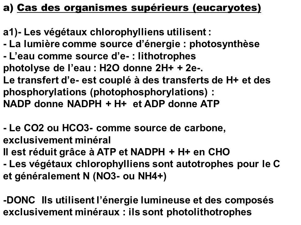 a) Cas des organismes supérieurs (eucaryotes) a1)- Les végétaux chlorophylliens utilisent : - La lumière comme source dénergie : photosynthèse - Leau