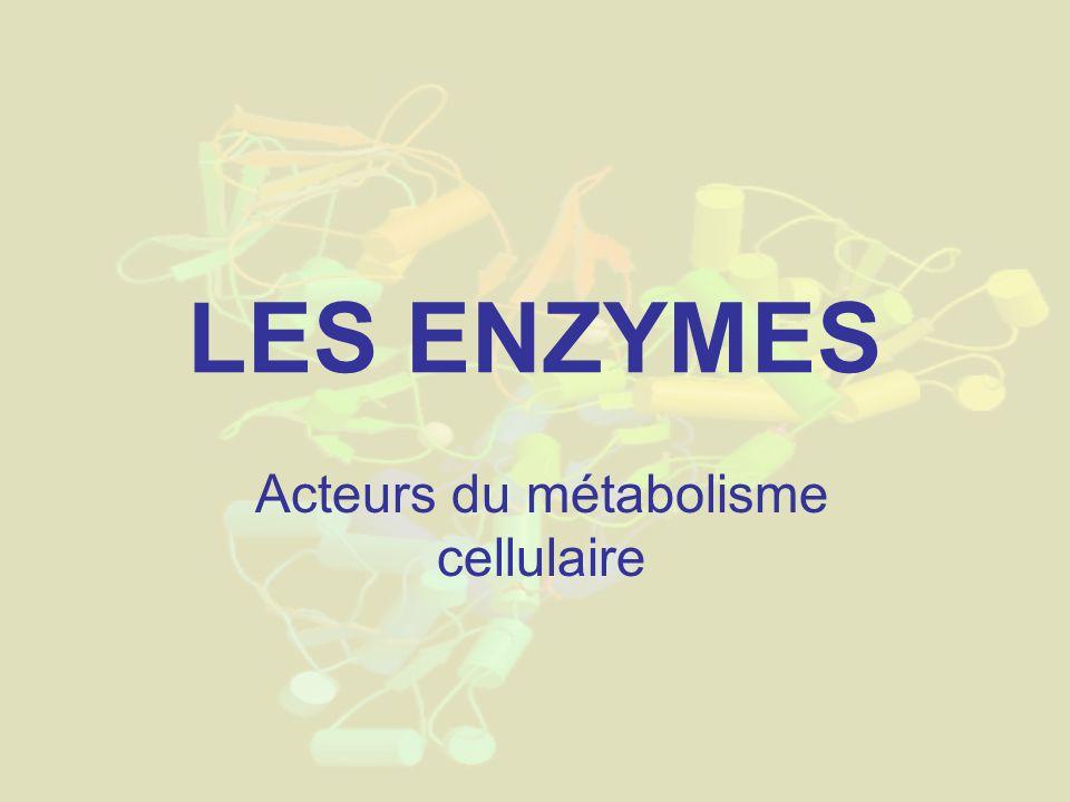LES ENZYMES Acteurs du métabolisme cellulaire