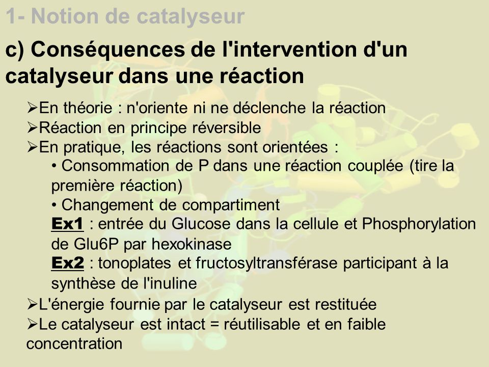 1- Notion de catalyseur c) Conséquences de l intervention d un catalyseur dans une réaction En théorie : n oriente ni ne déclenche la réaction Réaction en principe réversible En pratique, les réactions sont orientées : Consommation de P dans une réaction couplée (tire la première réaction) Changement de compartiment Ex1 : entrée du Glucose dans la cellule et Phosphorylation de Glu6P par hexokinase Ex2 : tonoplates et fructosyltransférase participant à la synthèse de l inuline L énergie fournie par le catalyseur est restituée Le catalyseur est intact = réutilisable et en faible concentration