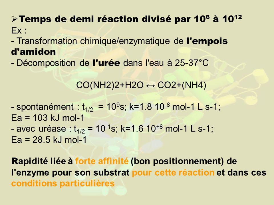 Temps de demi réaction divisé par 10 6 à 10 12 Ex : - Transformation chimique/enzymatique de l empois d amidon - Décomposition de l urée dans l eau à 25-37°C CO(NH2)2+H2O CO2+(NH4) - spontanément : t 1/2 = 10 9 s; k=1.8 10 -8 mol-1 L s-1; Ea = 103 kJ mol-1 - avec uréase : t 1/2 = 10 -1 s; k=1.6 10 +8 mol-1 L s-1; Ea = 28.5 kJ mol-1 R apidité liée à forte affinité (bon positionnement) de l enzyme pour son substrat pour cette réaction et dans ces conditions particulières