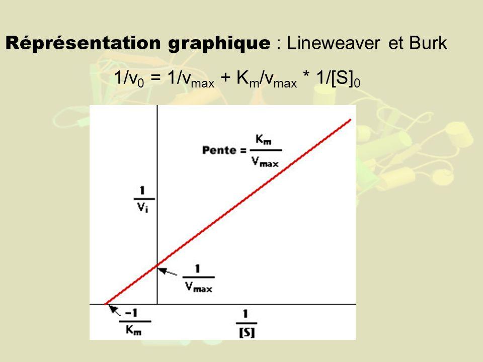 Réprésentation graphique : Lineweaver et Burk 1/v 0 = 1/v max + K m /v max * 1/[S] 0