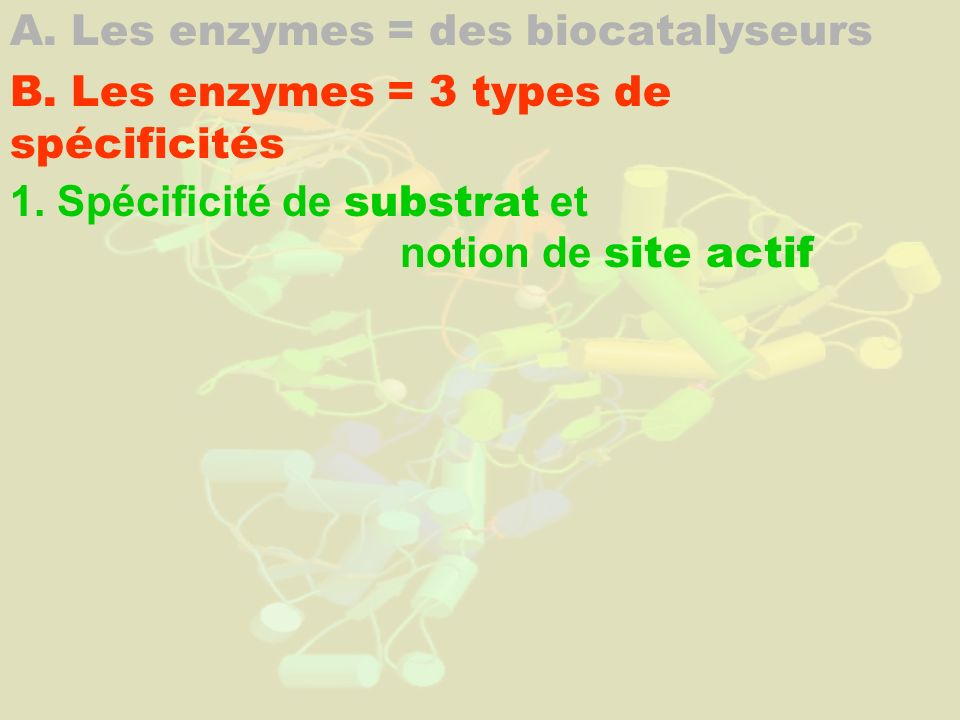 A. Les enzymes = des biocatalyseurs B. Les enzymes = 3 types de spécificités 1. Spécificité de substrat et notion de site actif