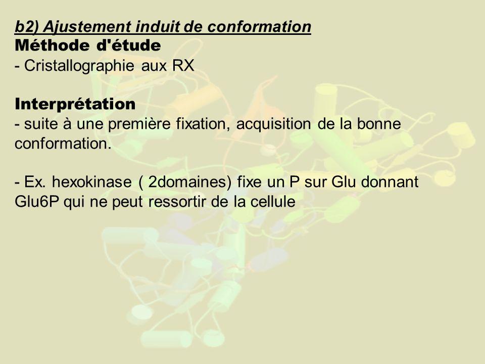 b2) Ajustement induit de conformation Méthode d étude - Cristallographie aux RX Interprétation - suite à une première fixation, acquisition de la bonne conformation.