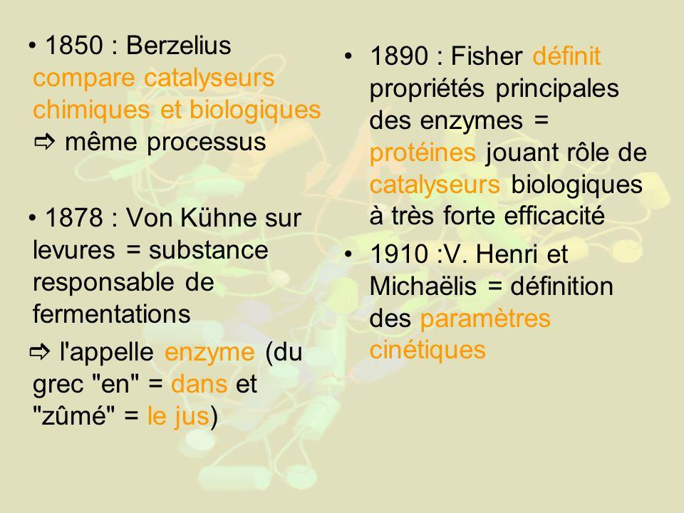 1850 : Berzelius compare catalyseurs chimiques et biologiques même processus 1878 : Von Kühne sur levures = substance responsable de fermentations l appelle enzyme (du grec en = dans et zûmé = le jus) 1890 : Fisher définit propriétés principales des enzymes = protéines jouant rôle de catalyseurs biologiques à très forte efficacité 1910 :V.