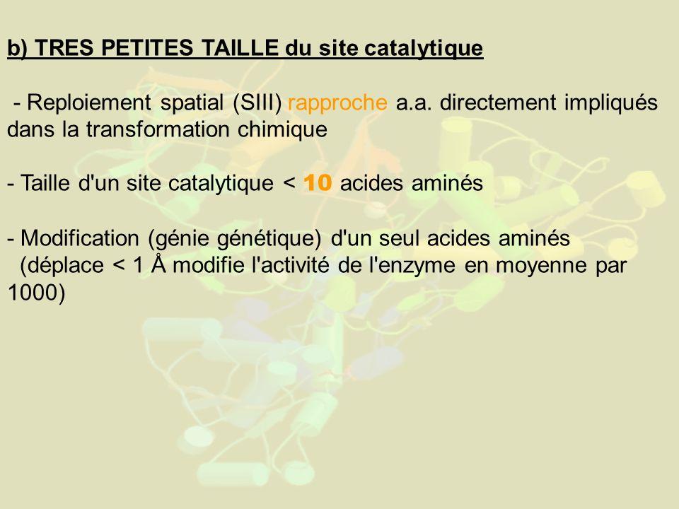 b) TRES PETITES TAILLE du site catalytique - Reploiement spatial (SIII) rapproche a.a. directement impliqués dans la transformation chimique - Taille
