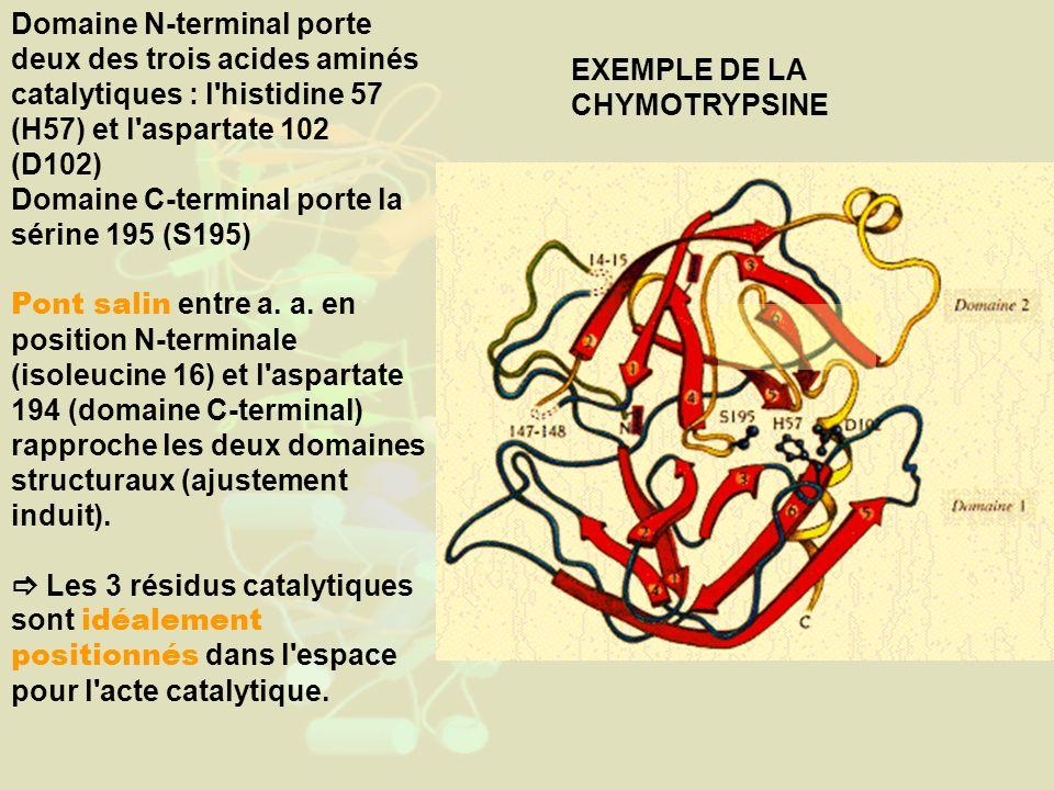 Domaine N-terminal porte deux des trois acides aminés catalytiques : l histidine 57 (H57) et l aspartate 102 (D102) Domaine C-terminal porte la sérine 195 (S195) Pont salin entre a.