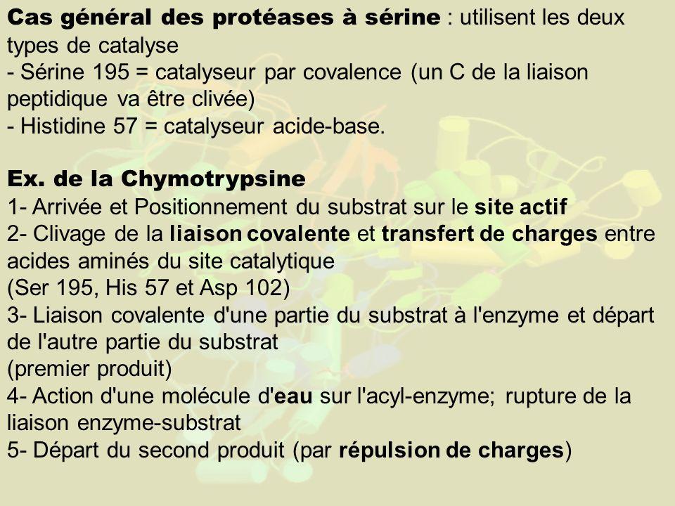 Cas général des protéases à sérine : utilisent les deux types de catalyse - Sérine 195 = catalyseur par covalence (un C de la liaison peptidique va être clivée) - Histidine 57 = catalyseur acide-base.
