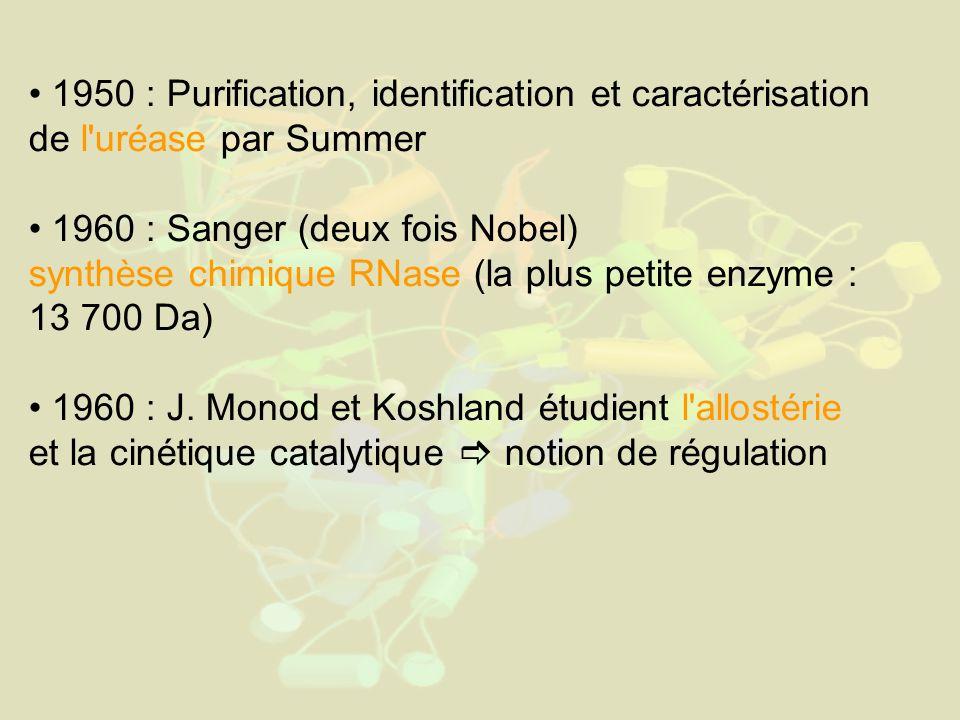 1950 : Purification, identification et caractérisation de l uréase par Summer 1960 : Sanger (deux fois Nobel) synthèse chimique RNase (la plus petite enzyme : 13 700 Da) 1960 : J.