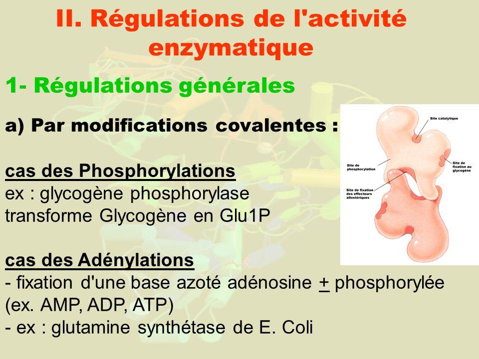 II. Régulations de l'activité enzymatique 1- Régulations générales a) Par modifications covalentes : cas des Phosphorylations ex : glycogène phosphory