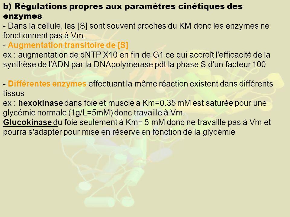 b) Régulations propres aux paramètres cinétiques des enzymes - Dans la cellule, les [S] sont souvent proches du KM donc les enzymes ne fonctionnent pas à Vm.