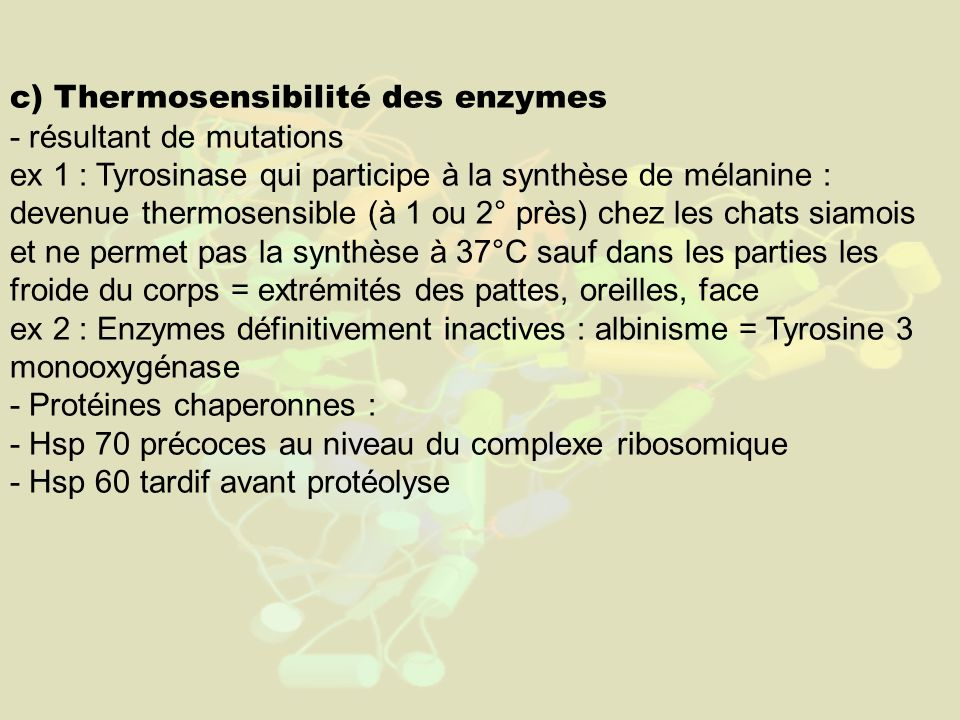 c) Thermosensibilité des enzymes - résultant de mutations ex 1 : Tyrosinase qui participe à la synthèse de mélanine : devenue thermosensible (à 1 ou 2° près) chez les chats siamois et ne permet pas la synthèse à 37°C sauf dans les parties les froide du corps = extrémités des pattes, oreilles, face ex 2 : Enzymes définitivement inactives : albinisme = Tyrosine 3 monooxygénase - Protéines chaperonnes : - Hsp 70 précoces au niveau du complexe ribosomique - Hsp 60 tardif avant protéolyse