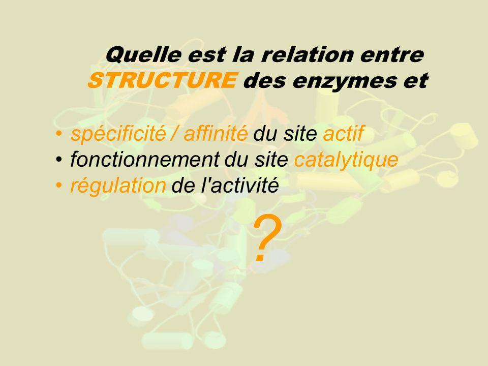 Quelle est la relation entre STRUCTURE des enzymes et spécificité / affinité du site actif fonctionnement du site catalytique régulation de l'activité