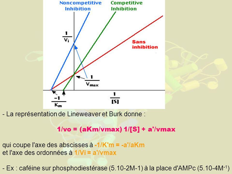 - La représentation de Lineweaver et Burk donne : 1/vo = (aKm/vmax) 1/[S] + a /vmax qui coupe l axe des abscisses à -1/K m = -a /aKm et l axe des ordonnées à 1/Vi = a /vmax - Ex : caféine sur phosphodiestérase (5.10-2M-1) à la place d AMPc (5.10-4M -1 )