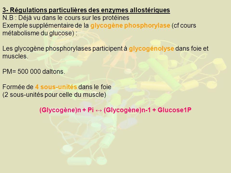 3- Régulations particulières des enzymes allostériques N.B : Déjà vu dans le cours sur les protéines Exemple supplémentaire de la glycogène phosphoryl