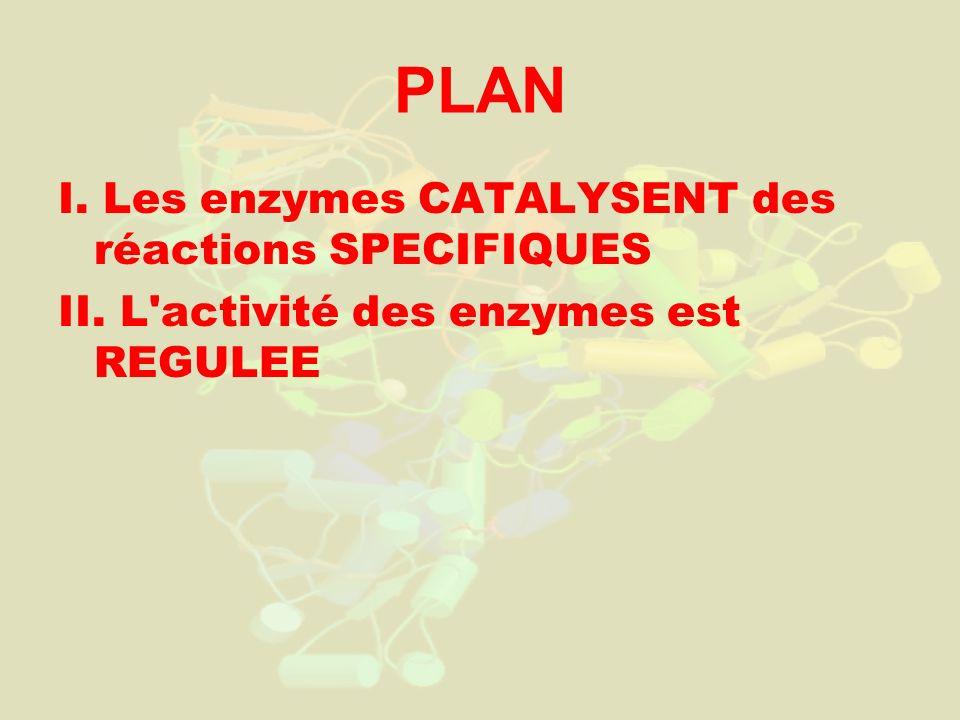 PLAN I. Les enzymes CATALYSENT des réactions SPECIFIQUES II. L'activité des enzymes est REGULEE
