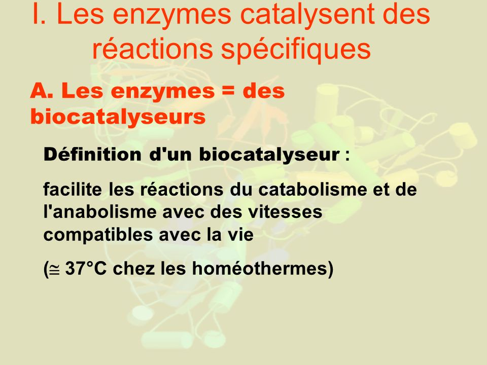 I. Les enzymes catalysent des réactions spécifiques A. Les enzymes = des biocatalyseurs Définition d'un biocatalyseur : facilite les réactions du cata