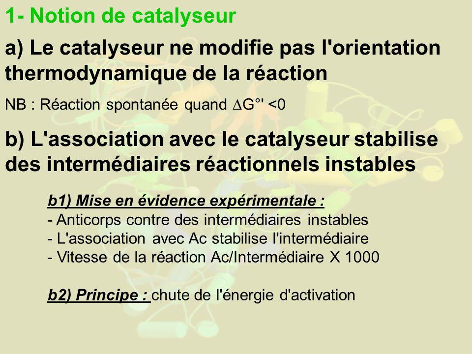 1- Notion de catalyseur a) Le catalyseur ne modifie pas l orientation thermodynamique de la réaction NB : Réaction spontanée quand G° <0 b) L association avec le catalyseur stabilise des intermédiaires réactionnels instables b1) Mise en évidence expérimentale : - Anticorps contre des intermédiaires instables - L association avec Ac stabilise l intermédiaire - Vitesse de la réaction Ac/Intermédiaire X 1000 b2) Principe : chute de l énergie d activation