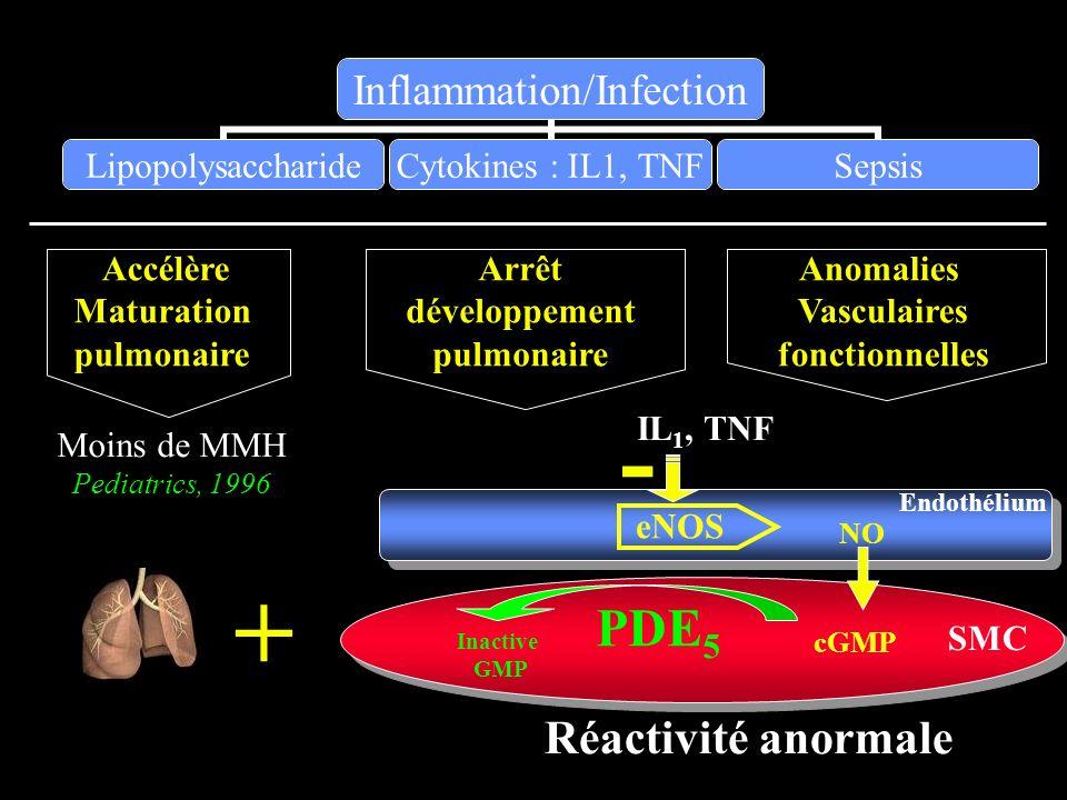Arrêt développement pulmonaire Accélère Maturation pulmonaire Moins de MMH Pediatrics, 1996 Anomalies Vasculaires fonctionnelles eNOS Endothélium NO c