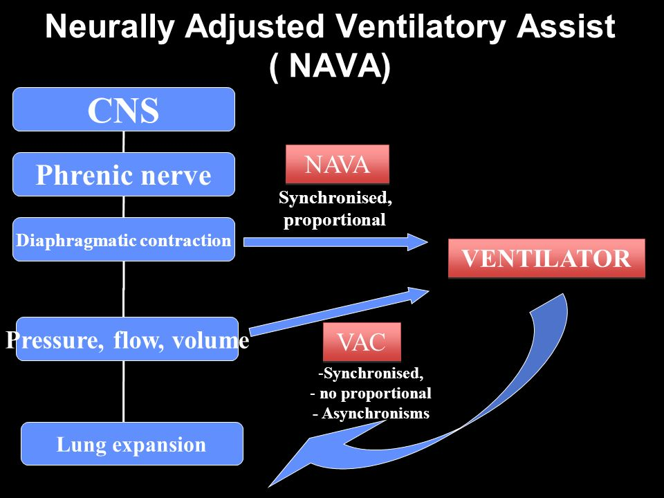 Neurally Adjusted Ventilatory Assist ( NAVA) VAC NAVA -Synchronised, - no proportional - Asynchronisms Synchronised, proportional CNS Phrenic nerve Diaphragmatic contraction Lung expansion Pressure, flow, volume VENTILATOR
