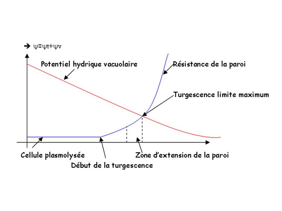 2- Passage de l eau a) Le Potentiel hydrique b) Sens de passage de l eau et osmose c) Méthodes de mesure