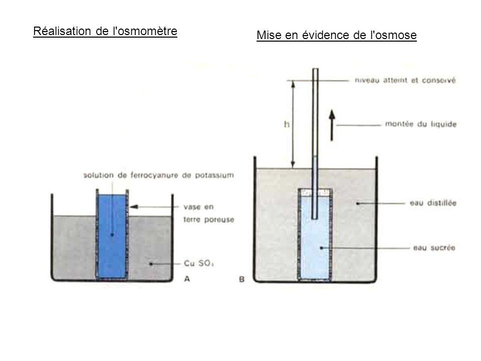 Réalisation de l'osmomètre Mise en évidence de l'osmose