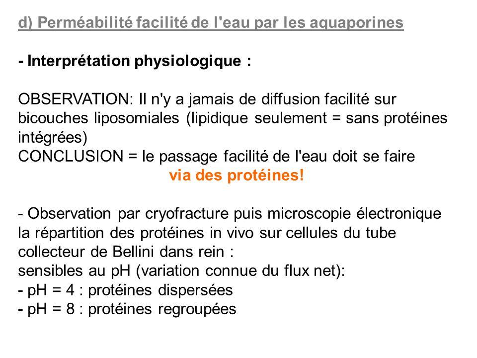 d) Perméabilité facilité de l'eau par les aquaporines - Interprétation physiologique : OBSERVATION: Il n'y a jamais de diffusion facilité sur bicouche