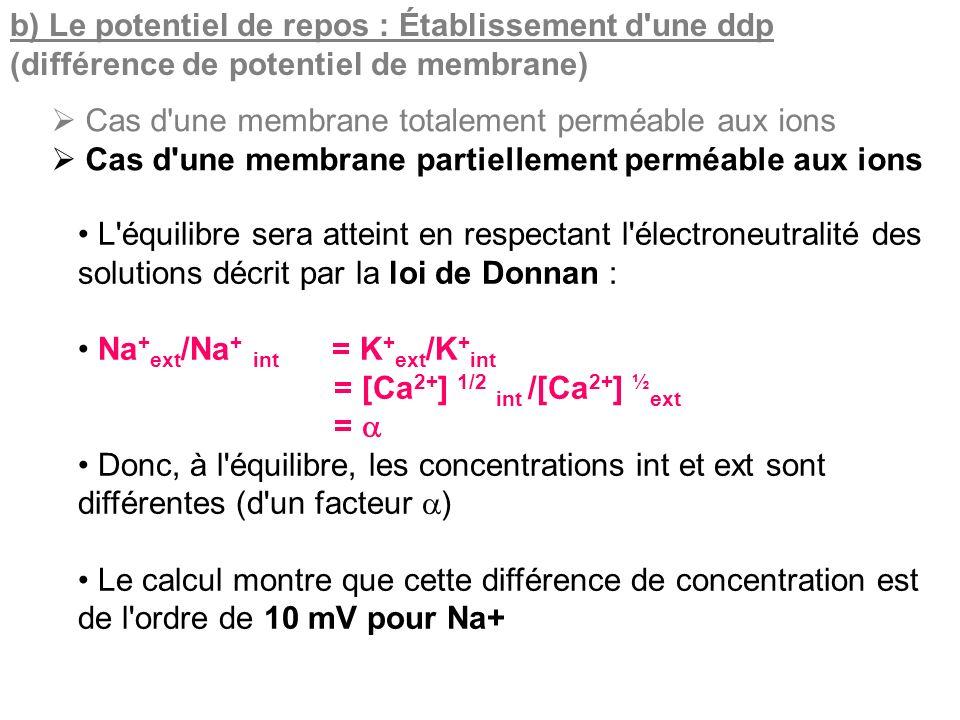 b) Le potentiel de repos : Établissement d'une ddp (différence de potentiel de membrane) Cas d'une membrane totalement perméable aux ions Cas d'une me