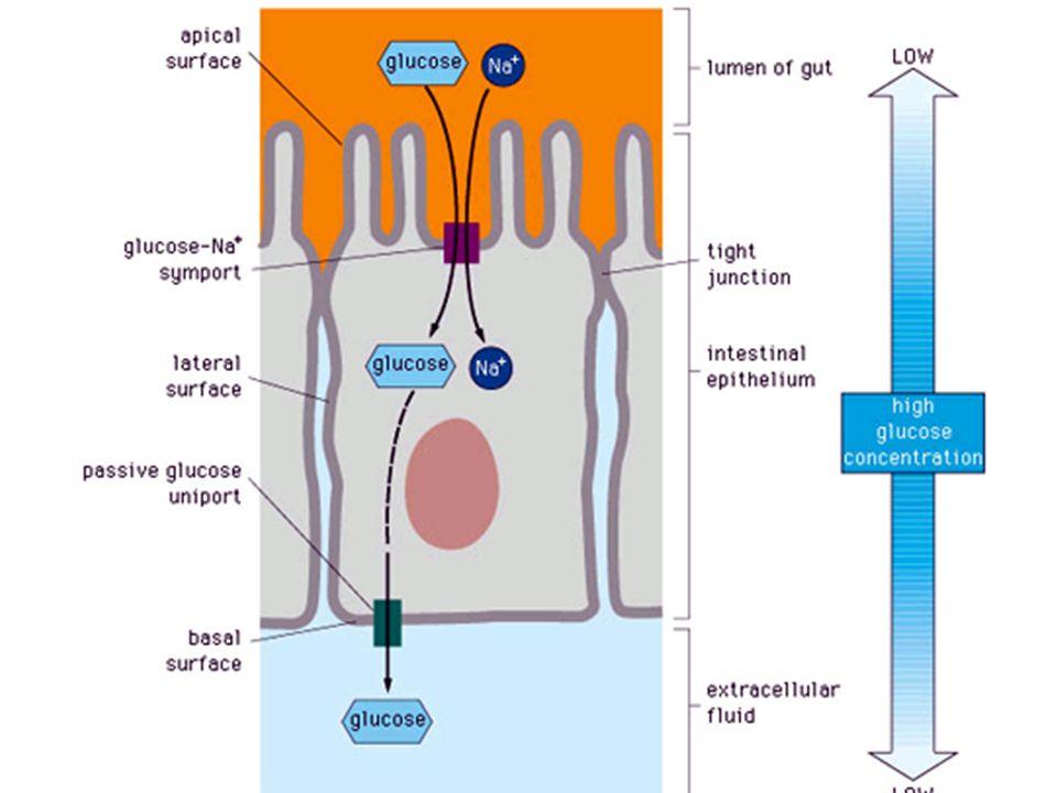 Ex. 2 : Comparaison cellule animale / cellule végétale