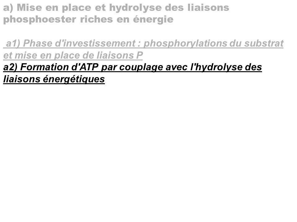 a) Mise en place et hydrolyse des liaisons phosphoester riches en énergie a1) Phase d'investissement : phosphorylations du substrat et mise en place d