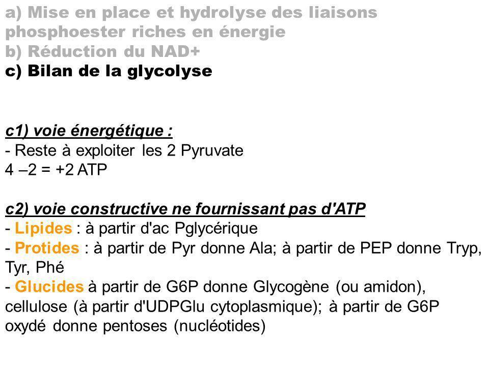 a) Mise en place et hydrolyse des liaisons phosphoester riches en énergie b) Réduction du NAD+ c) Bilan de la glycolyse c1) voie énergétique : - Reste