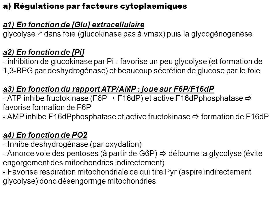 a) Régulations par facteurs cytoplasmiques a1) En fonction de [Glu] extracellulaire glycolyse dans foie (glucokinase pas à vmax) puis la glycogénogenè